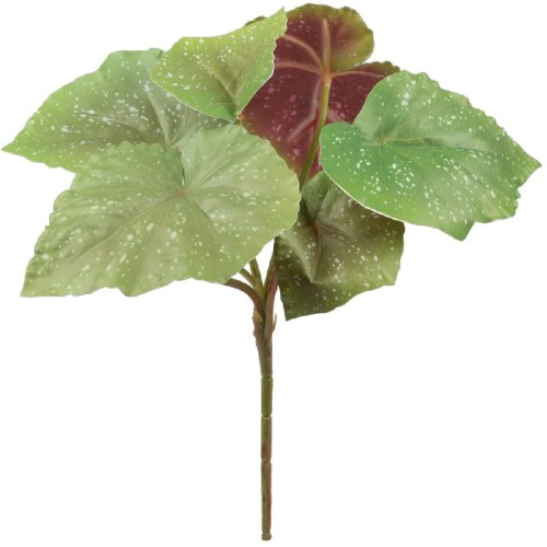 Begonia mini tufa verde H30