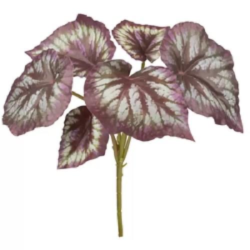 Begonia mini tufa verde mov H30