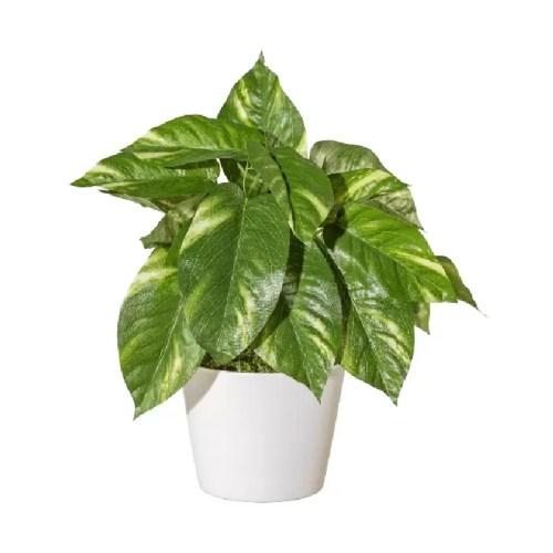 Dieffenbachia tufa artificiala 25cm fara ghiveci