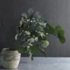 Eucalipt banut verde vaza pic