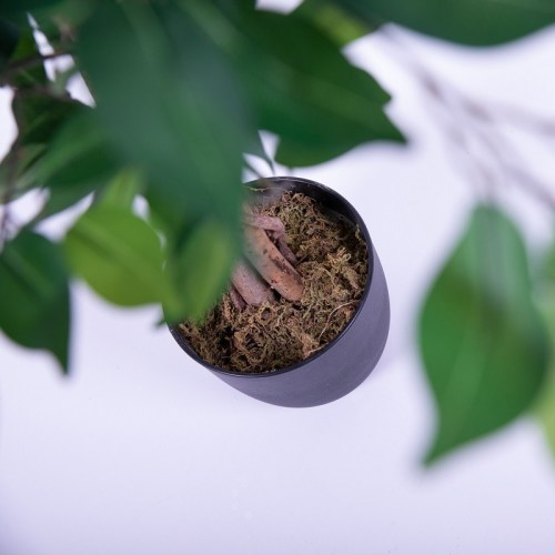 Ficus artificial 120cm 4