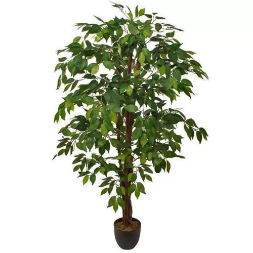 Ficus benjamina pe trunchi natural 150cm