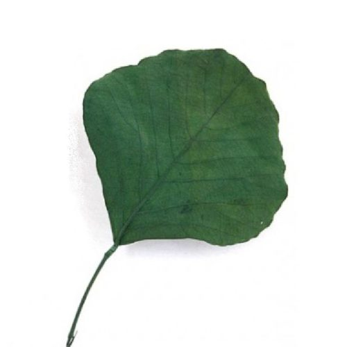 Frunze conservate Cobra verde