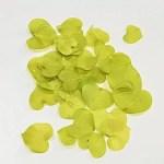 Frunze decorative verde lime grup b