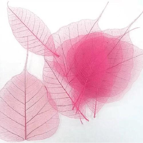 Frunze roz conservate