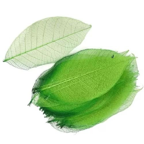 Frunze uscate schelet verde