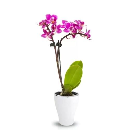 Ghiveci Orchideea rotund glossy 1