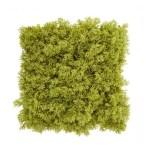 Gradina verticala licheni artificiali verde lime 01