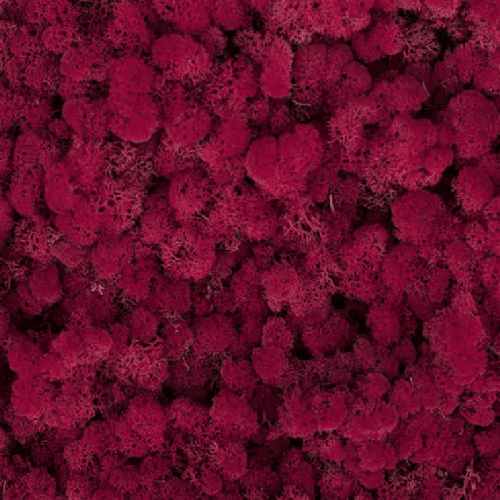 Licheni Red Carmin 500gr