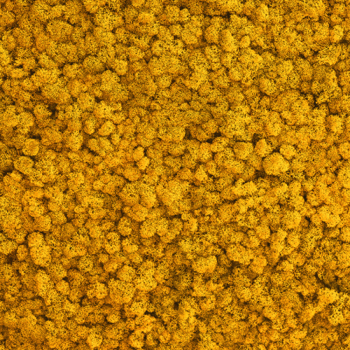 Licheni Warm Yellow 500gr