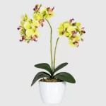 Orhidee decorativa verde ghiveci 50cmG
