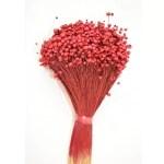 PU Glixia Marcela Red