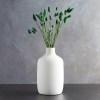 Phalaris verde vaza pic