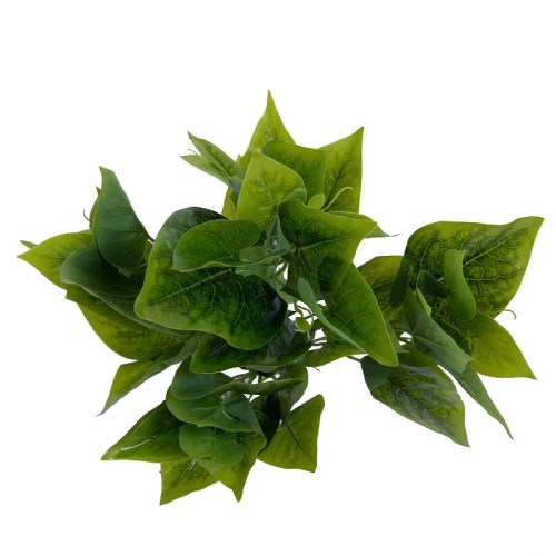 Philodendron tufa H40