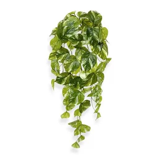 Pothos 60cm Artflora