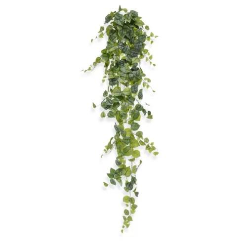 Scindapsus pictus 170cm