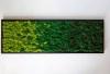Tablou licheni 30x100 1