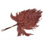 feriga conservata rumo red