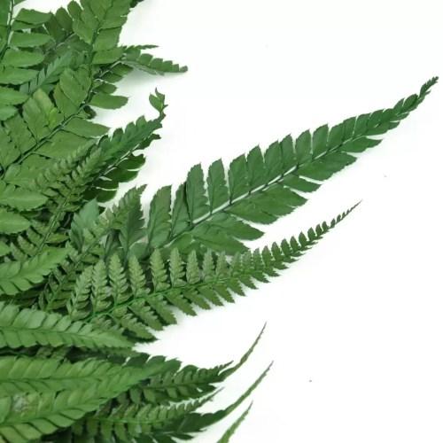 feriga conservata wild verde zoom