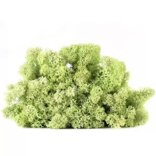 licheni vrac artflora green menta