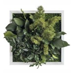 tablou plante conservate 25x25 1