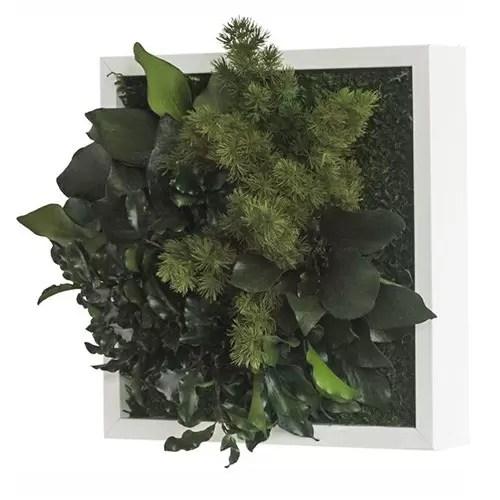 tablou plante