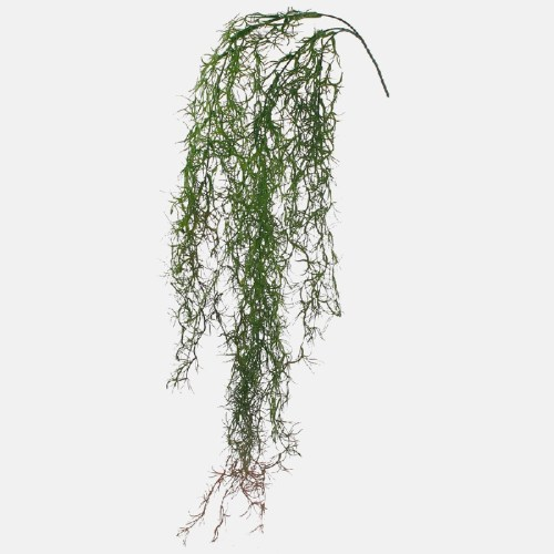 Asparagus curgator verde h100cm