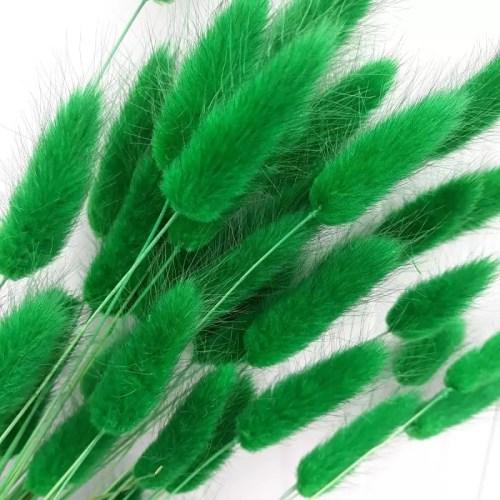 Lagurus verde iarba set