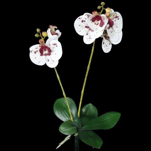 Orhidee alb burgund