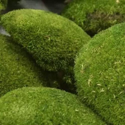 artflora ball moss green grass 1