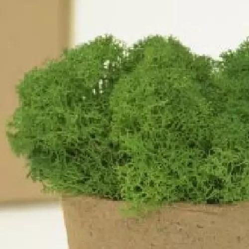 licheni premium green grass 1