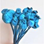 Mac albastru