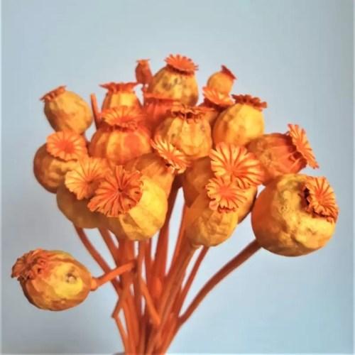 Mac portocaliu