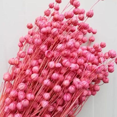 Planta in roz set