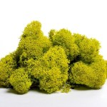 artflora green lime curatati