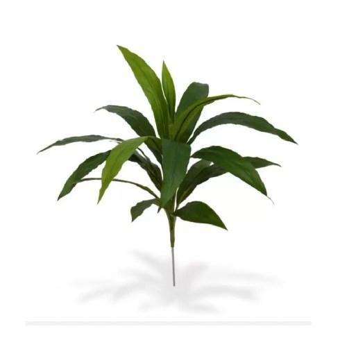 Dracaena tufa 60cm