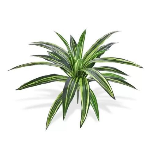 Dracaena variegata tufa 40cm