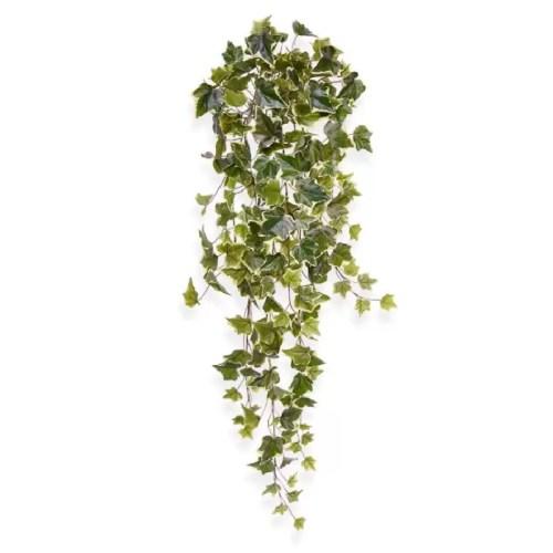Iedera Hedera variegata 80cm