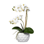 Orhidee mini in ghiveci ceramic alb 40cm