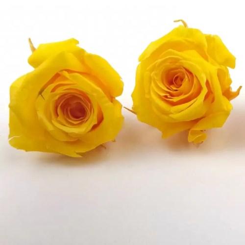 Trandafir mini stabilizat x12 galben