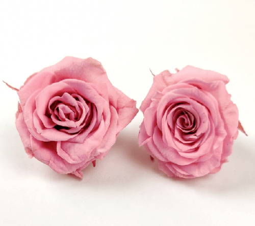 Trandafir mini stabilizat x12 roz