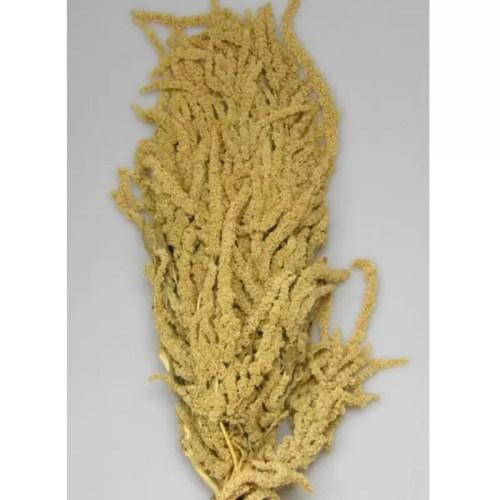 Amaranthus prep. natur