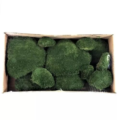 Muschi bombat verde inchis
