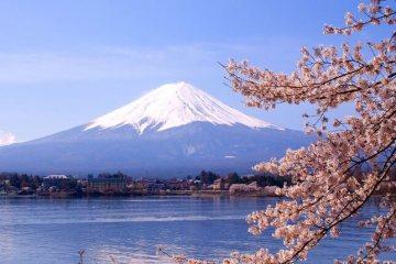 Ikuti Acara Discovery Japan Selama Satu Minggu