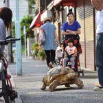 20 Fakta Menarik Tentang Jepang Dengan Penjelasan Singkat