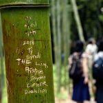 Hutan Bambu Arashiyama Dirusak Sejumlah Turis Asing