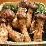 8 Jenis Jamur Jepang Dan Khasiatnya