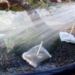 Teknik Yang Tepat Dalam Menyiram Tanaman Bonsai