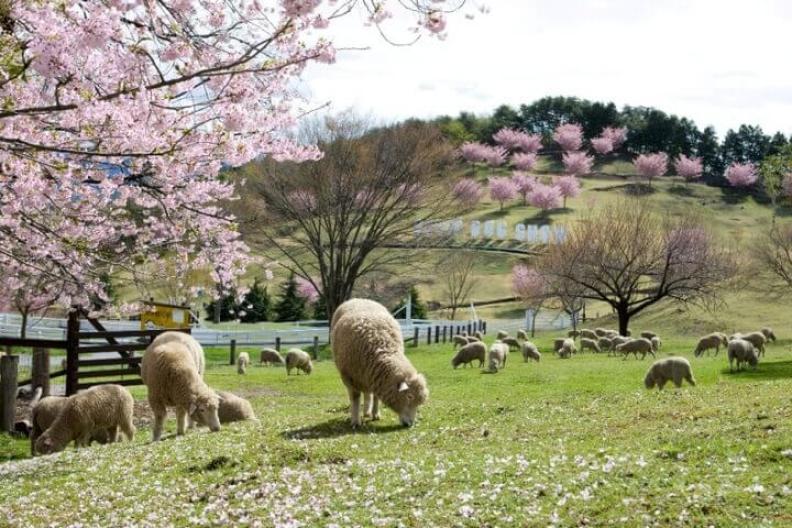 Rekomendasi Destinasi Wisata Perkebunan Di Jepang Versi Artforia