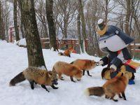 Pengalaman Seru Di Desa Rubah Zao Fox Village Prefektur Miyagi